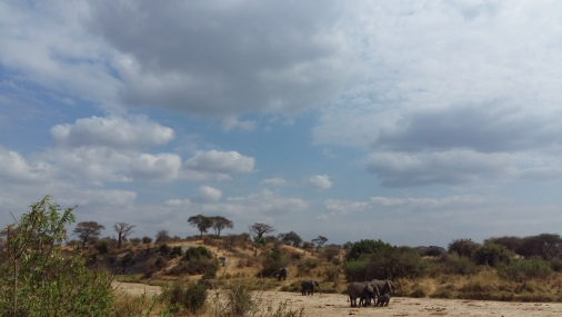 Elephants in Tarangire National Parc