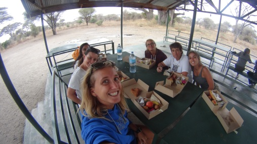 Eating between lions and elephants