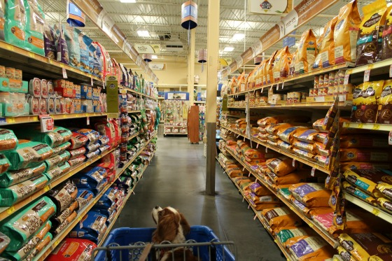 Choosing-The-Right-Food-For-Your-Small-Dog-PureEssentials.jpg